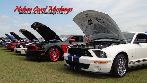 Nick Nicholas Ford Inverness >> Nature Coast Mustangs Desktop Wallpapers